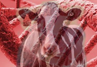 Dairy Producer Considerations for Genomic Testing