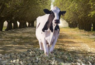 Almond & Dairy Industries Share a Beneficial Symbiotic Relationship