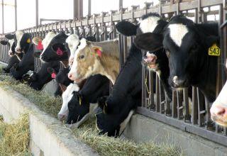 Taking Advantage of Genomic Testing on Dairies