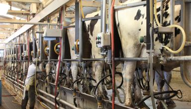 New Bipartisan Bill Introduced to Address Labor Shortages on Dairy Farms