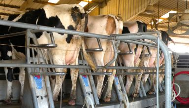 New Dairy Margin Coverage Program